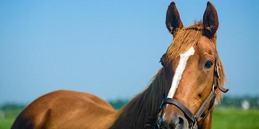 9th Annual UK Equine Showcase