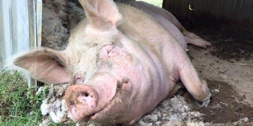 Tours of Farm Animal Rescue 1/12/19