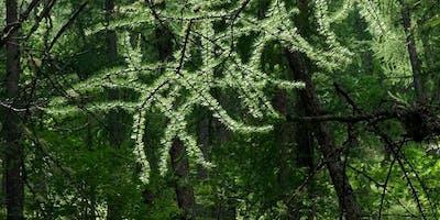 Conférence leadership et forêt, l'alliance gagnante