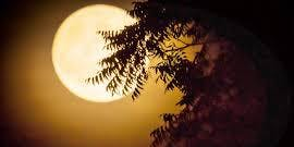Golden Fullmoon Meditation