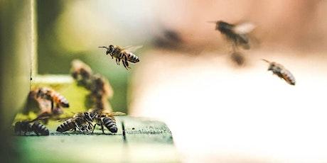 Garden Smarter: Beekeeping tickets