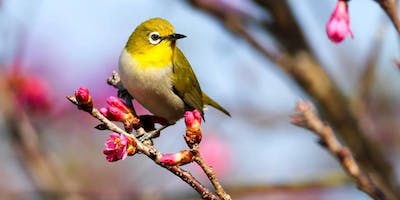 Garden Smarter: Songbird Migration – How Your Yard Can Make a Difference