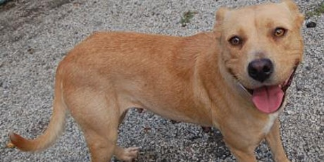 Jasper Animal Rescue Mission Pet Adoption Event PetSmart Beaufort tickets