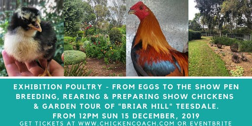 Exhibition Poultry Workshop: How to breed, rear and prepare chickens for show with breeder Ian Nash