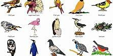 Bird Adaptations by Warnell