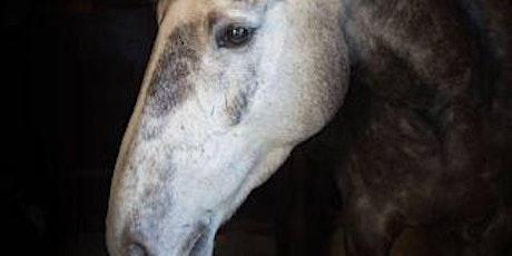 Horse Psychology Workshop - Handling tickets
