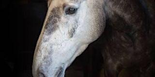 Horse Psychology Workshop - Handling