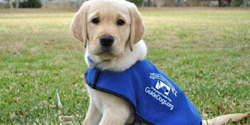 Service Dog Awareness Training for Emergency Responders