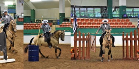 Working Equitation Clinic - Beginner to Advanced tickets