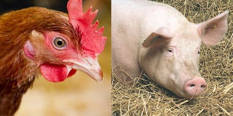Pigs and Poultry  - Optimising Production tickets