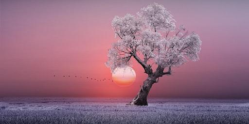 New Year Retreat Sat 11 & Sun 12 January
