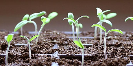Just Add Water???  Seed Starting Indoors tickets