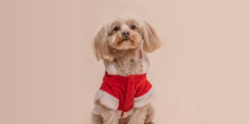 Pawliday Dog Photos with Santa