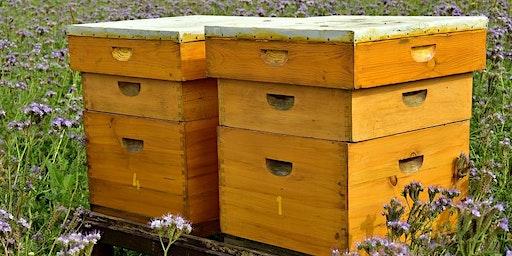 Création d'une ruche tout jardin