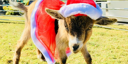 Holiday Goat Yoga & Toy Drive!