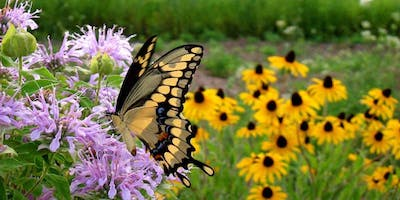 Inviting Butterflies to Your Place!