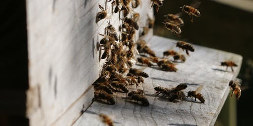Bucks County Beekeepers Spring Seminar - 2020