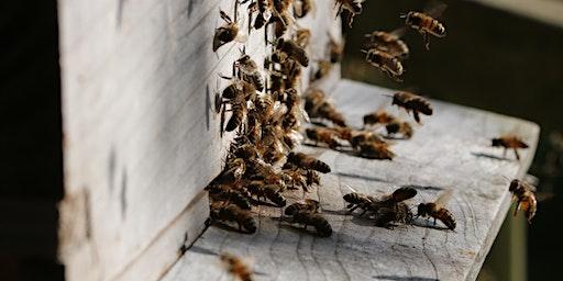 Bucks County Beekeepers Spring Seminar - 2020