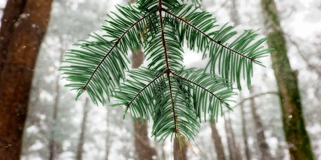 The Pine Hollow Arboretum's 2nd Annual Winter Gathering tickets