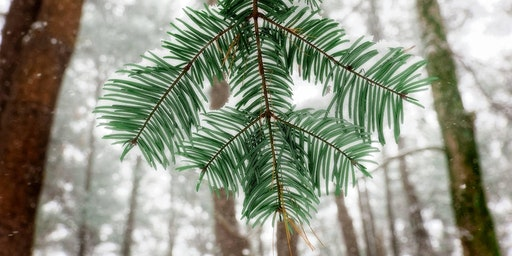 The Pine Hollow Arboretum's 2nd Annual Winter Gathering