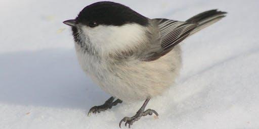 BAS Bird Count Feeder Sector