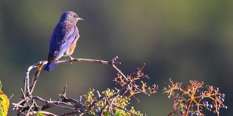 Beginner's Bird and Plant Identification Walk tickets