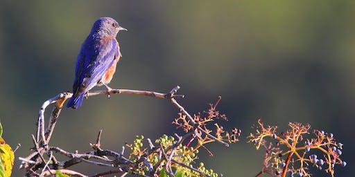 Beginner's Bird and Plant Identification Walk