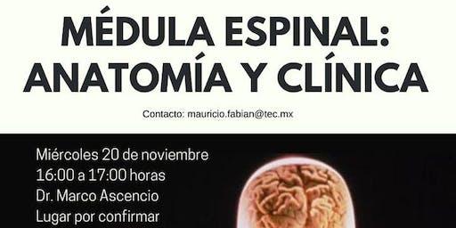Médula espinal: anatomía y clínica