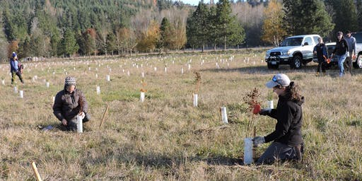 Yelm Shoreline Planting - 12/7