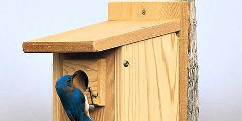 Bird Workshop -  Eastern Bluebirds