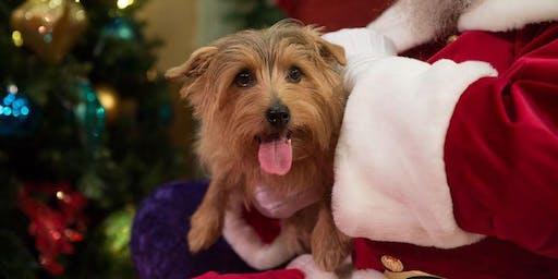 Claus & Paws - Pet Photos with Singing Santa