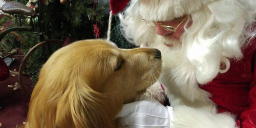 Mrs Santa PAWS- Doggy Grotto & Playdate