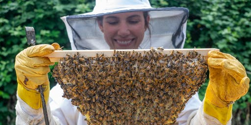 Beekeeping Bootcamp: From First Steps to Hive Success