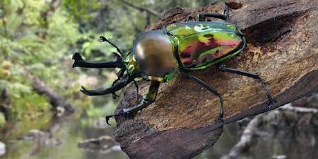 Spineless Wonders - Invertebrates Up Close (Ages 5-11 years) tickets