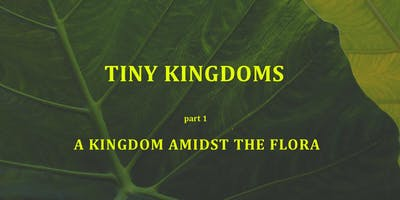 TINY KINGDOMS by Tara Streiff   Opening Night