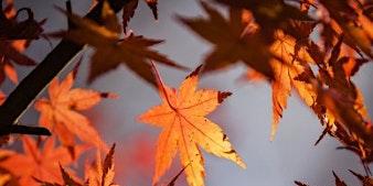 Printmaking with Foliage - Ravenshead Library - Community Learning