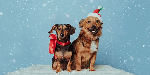 Christmas Pet Photoshoot At Jollyes Dover