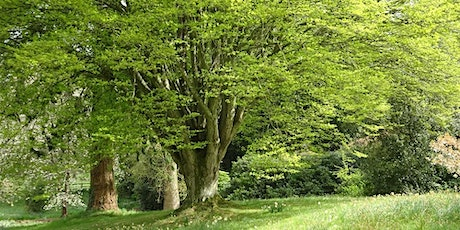 Designing with Trees and Shrubs Mells tickets