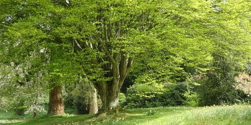 Designing with Trees and Shrubs Mells