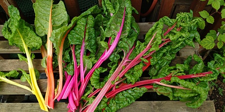 Organic food growing for beginners tickets