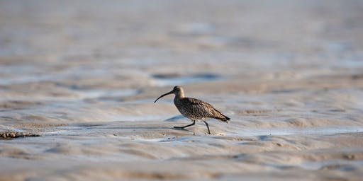 RSPB Wetland and Estuary Waders Guided Walk