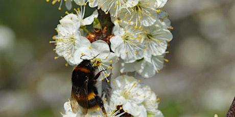 Spotlight on Bees tickets