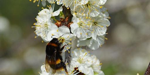 Spotlight on Bees
