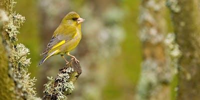 RSPB Spring Birdwatching Walk