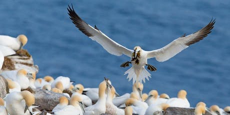 Seabirds, Songbirds, Seascapes and Whales of Avalon Newfoundland tickets