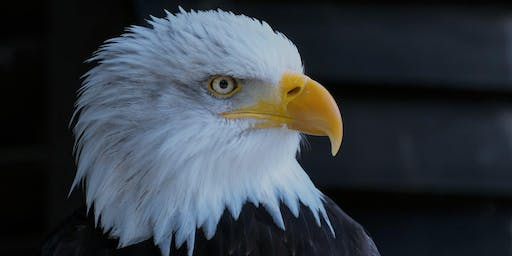 Friends of Cheakamus First Sunday: Experience Wintering Bald Eagles