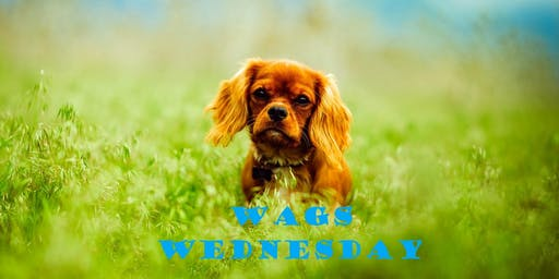 Wags Wednesday