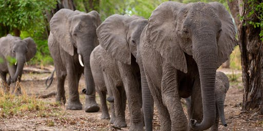 Zambia Safari Social & Holiday Happy Hour
