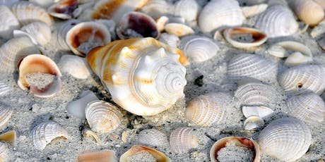 Hotspots for Florida Shell Collecting tickets