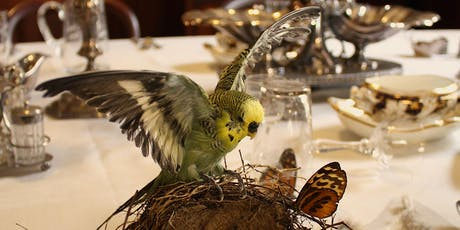 Introduction to Taxidermy: Non-Native Birds tickets